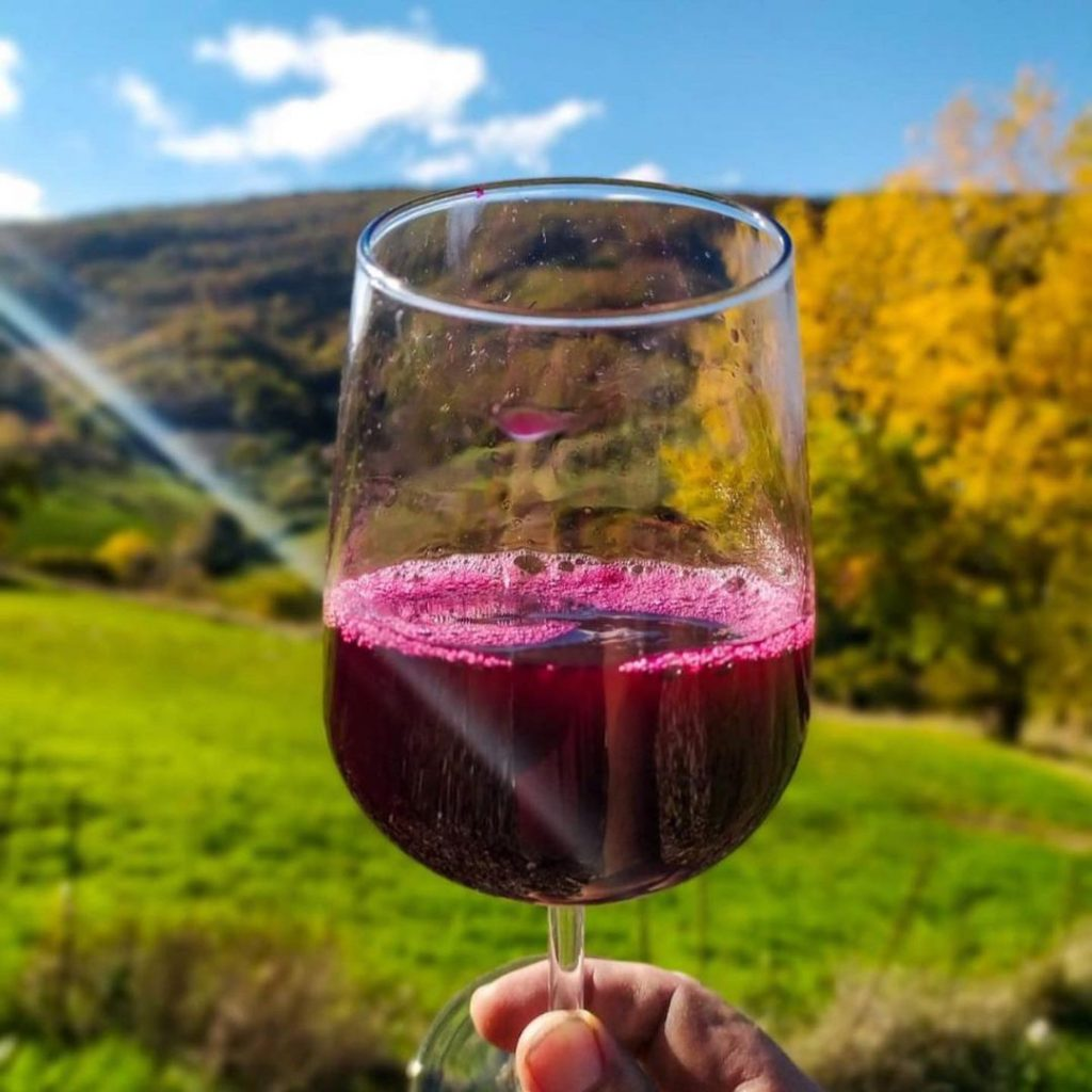 Mejores vinos mexicanos tintos