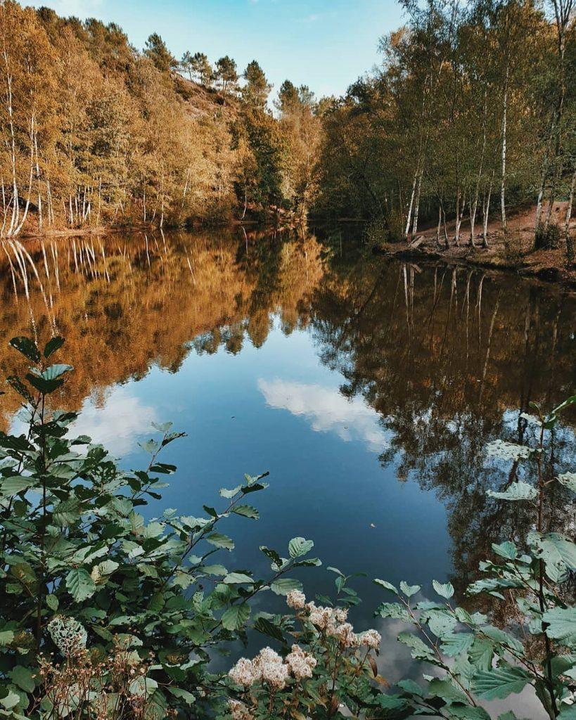 bosques más grandes y bonitos