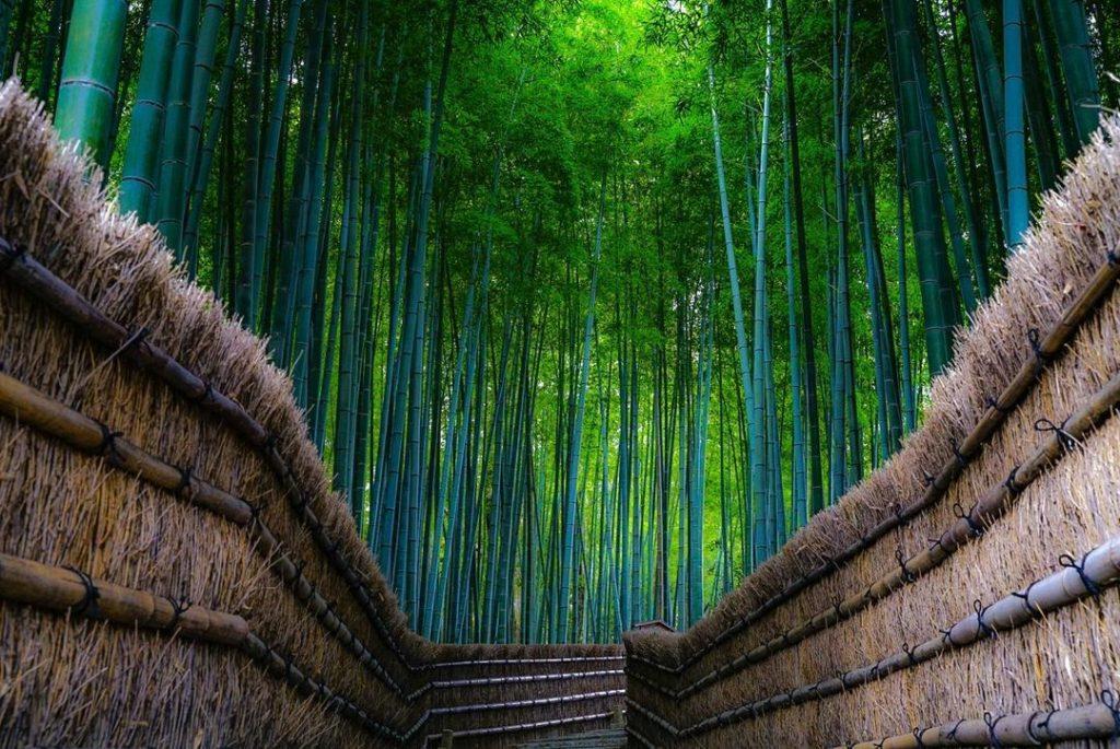 Bosque de Sagano